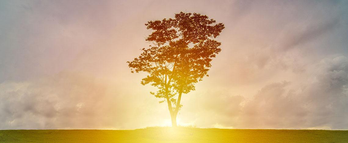 Silhouette of tree in sunshine